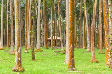 troncs de palmier, Anse des Cascades, île de la Réunion