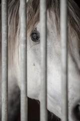 Horse hidden in a stall