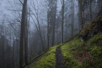 Nebel in der Wehratalschlucht