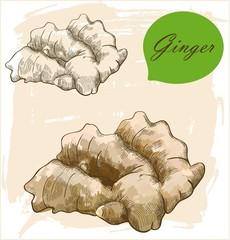 Ginger root illustration