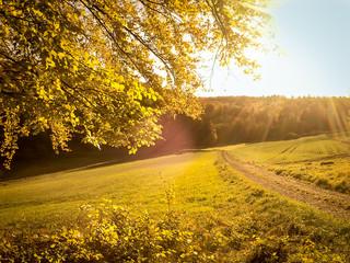 Wanderweg im goldenen Licht