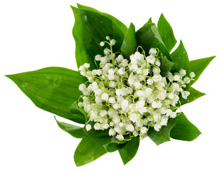bouquet of lilies of the valley isolated on the white background