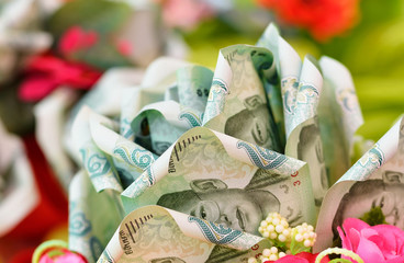money flower on  background