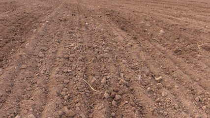 tilt up country field on plowing tractor in summer time