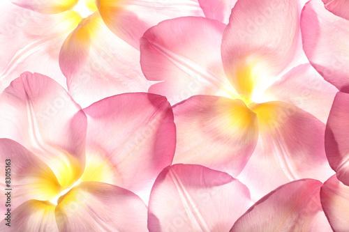 Fototapeta colorful flower petals