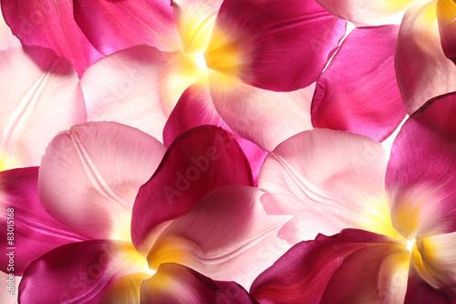 colorful flower petals - 83015168