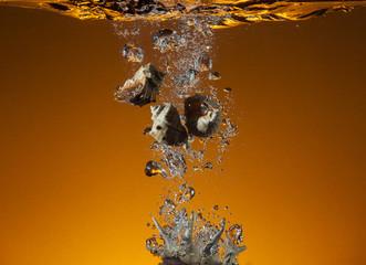 раковина в воде