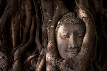 Buddha's head in tree roots