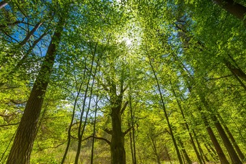 Green springtime forest