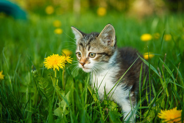 black and white kitty cat sitting in the green grass with yellow