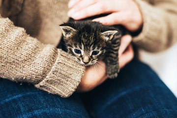 Man holding a tiny little tabby kitten