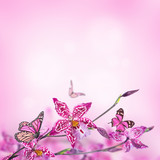 Floral background of tropical orchids, butterfly