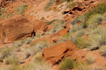 Desert grass on a red sandstone rocks background