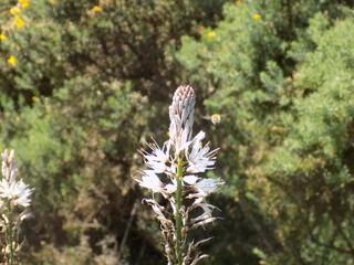 abeja volando sobre una flor
