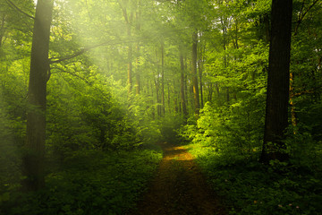 Beautiful rays in the spring forest