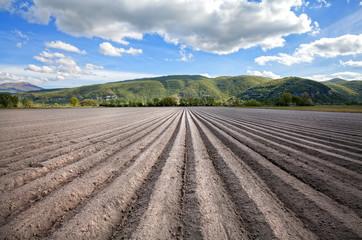 campo seminato