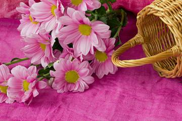ветка розовых хризантем