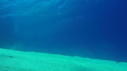 Garden eels (Gorgasia sillneri) eels hiding in the sand