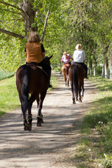 Group of woman horse riders in the forest on sunny day
