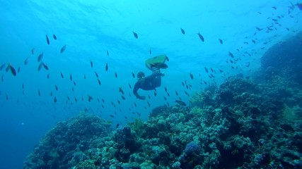Freediver dives over the coral reef, Red Sea, Egypt