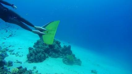 Freediver swimming underwater, Red Sea, Egypt