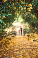Autumn leaf and defocused background