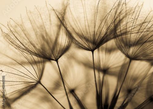 Zdjęcia na płótnie, fototapety na wymiar, obrazy na ścianę : Abstract dandelion flower background, extreme closeup. Big dandelion on natural background. Art photography