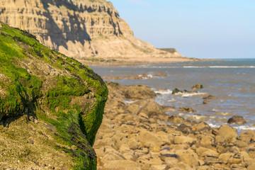 Green seaweed rock standing proud on beach.