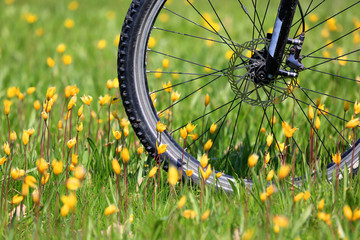 Bike wheel on flower meadow