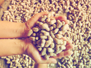 Woman hand holding peanuts in shells.