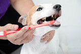 hand brushing dog