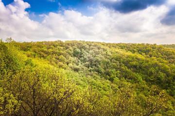 landscape the deciduous forest