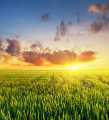 Filed during bright sunset. Agricultural landscape