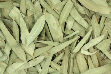 Dried eucalyptus leaves abstract background