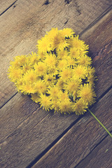 Summer background with yellow dandelions /Heart from dandelions