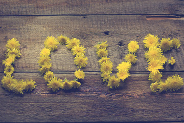 Summer background with yellow dandelions / love of dandelions