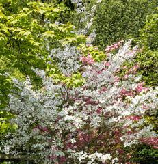 Arbre en fleur - blanc et rose