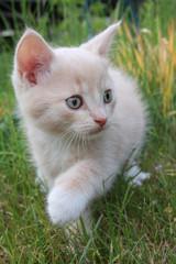 Katzenbaby V