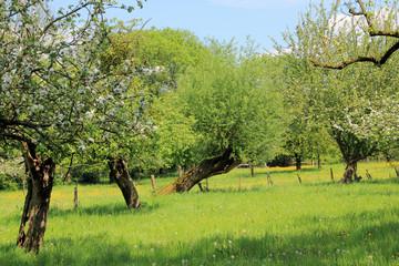 Naturschutzgebier Urdenbacher Kämpe bei Düsseldorf