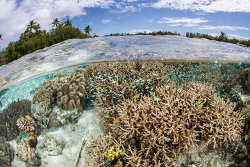 Healthy South Pacific Coral Reef