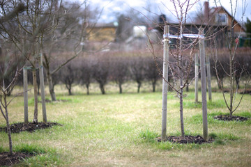 Fruit trees planting in the garden