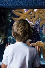 Young man looking at big starfish