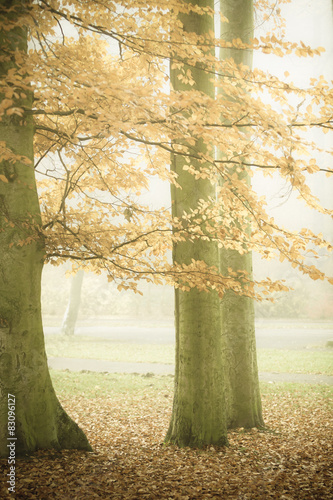 Trees in autumn park foggy day © Voyagerix