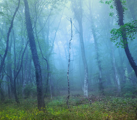 Mysterious dark forest in fog with green leaves and yellow flowe © den-belitsky