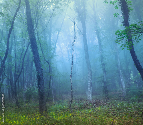 Mysterious dark forest in fog with green leaves and yellow flowe