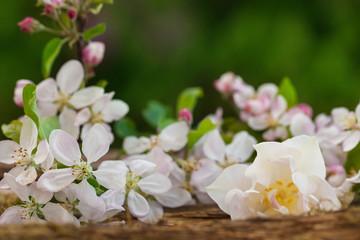 Apfelblüten und Tulpe auf Holz