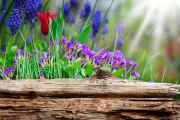 Frühlingsblumen hinter Holzbrett