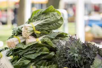Fresh organic vegetables - Leafy salad greens at farmer's market