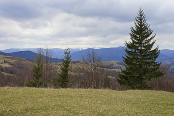 landscape with Carpathian mountains at spring