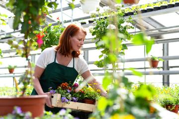 Gärtnerin arbeitet im Gewächshaus eines Blumenhandels